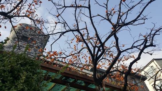 Winter foliage_persimmons