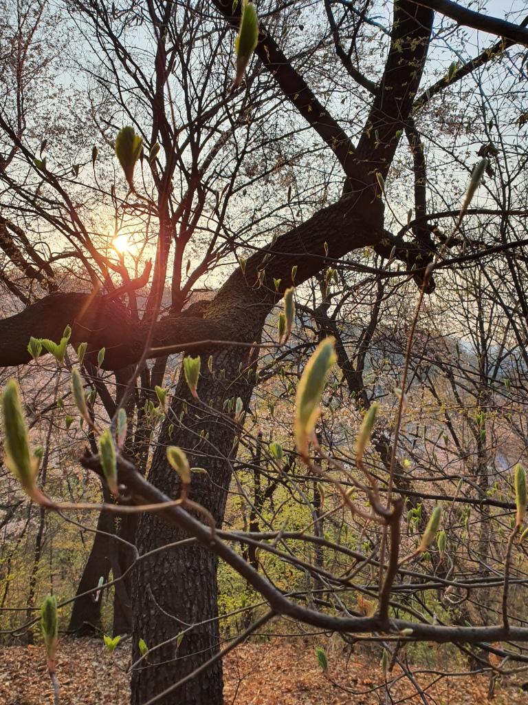 sunlight through trees sunrise