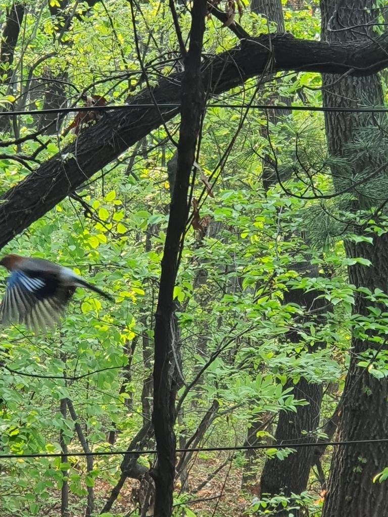 blue bird in flght mountain