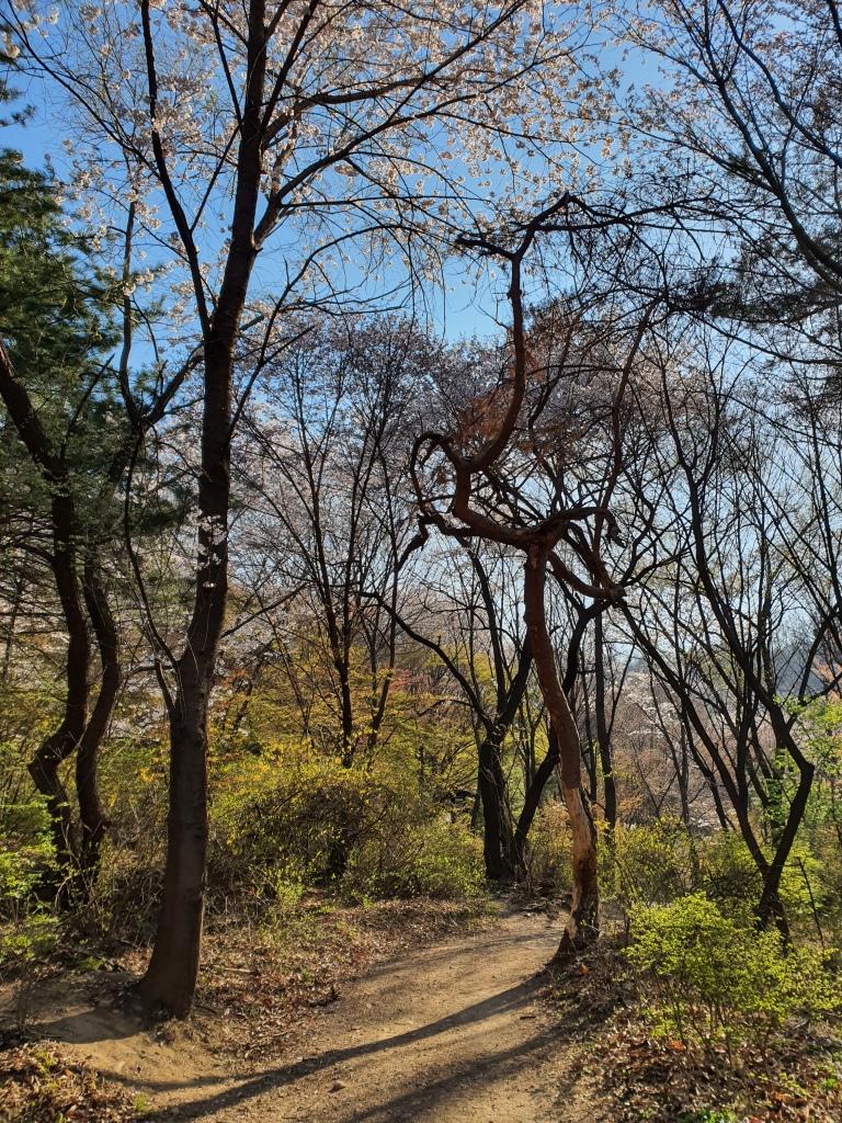 sunny forest trail korea